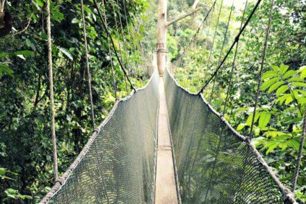 Canopy Walkway Poring