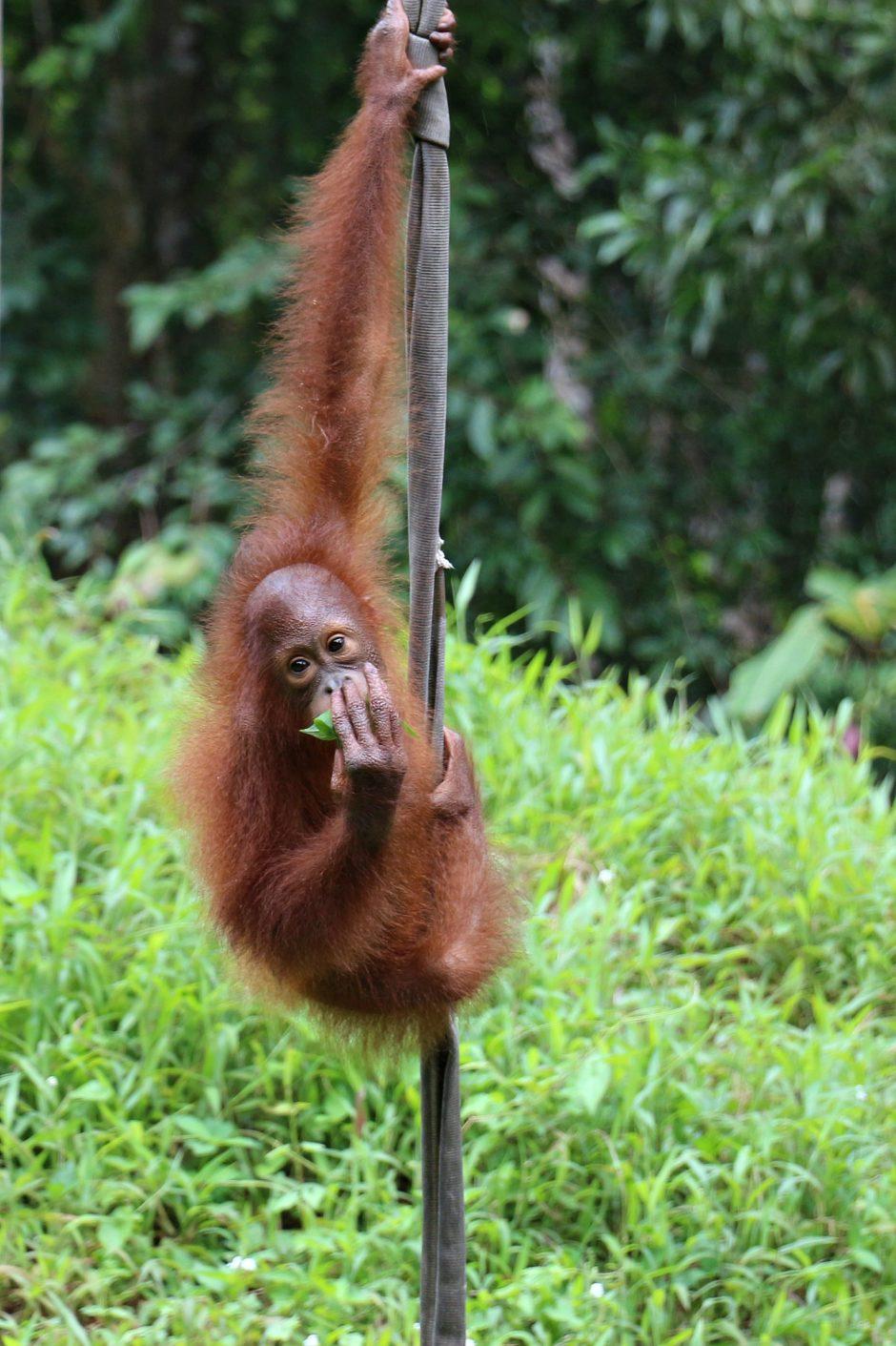 wildlife park borneo