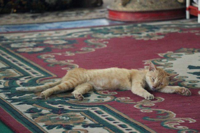 Katze in der Chauk Htat Gyi Pagode