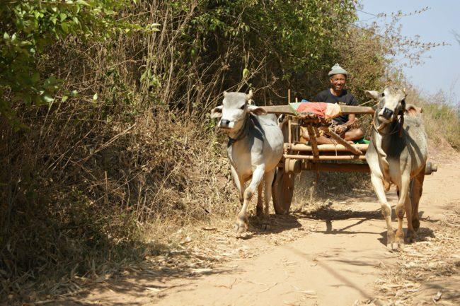 einheimischer Myanmar