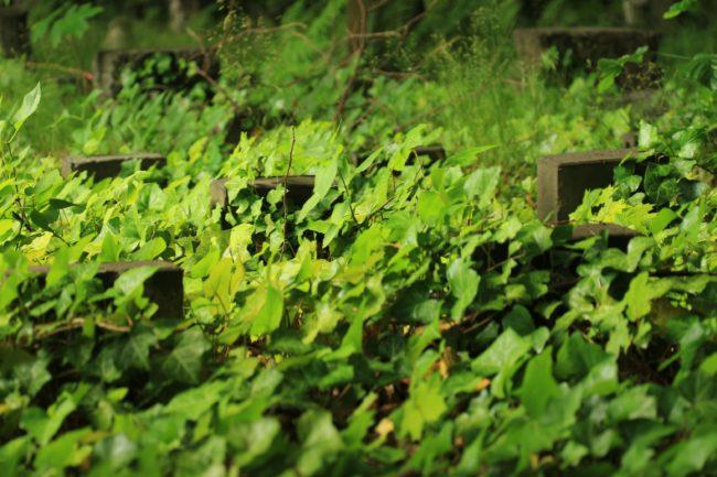 Gräber jüdischer Friedhof Weißensee