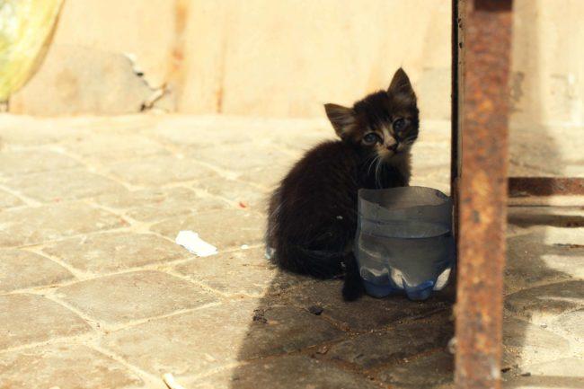 Eljadida_Marokko_021