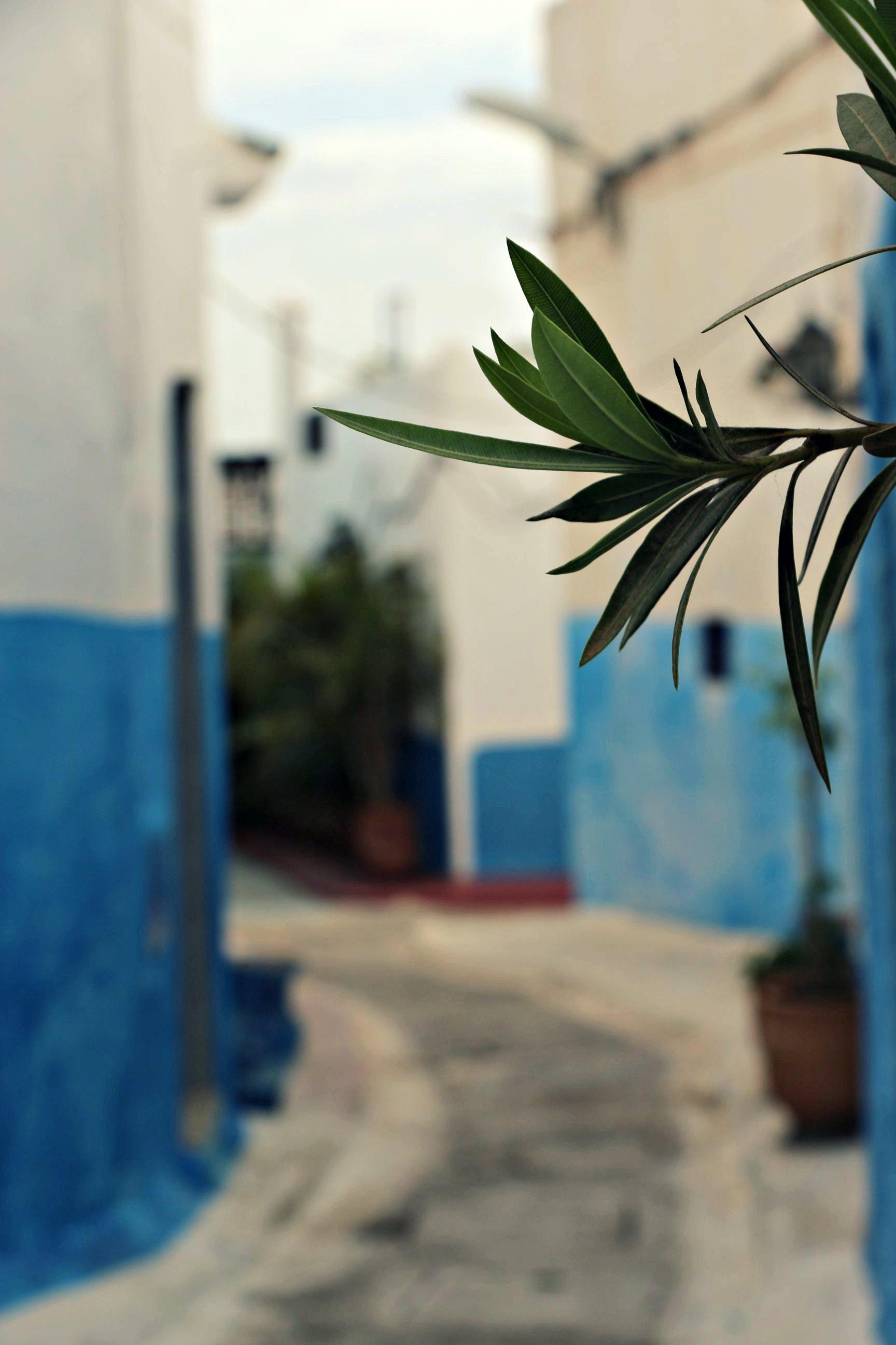 Rabat_016
