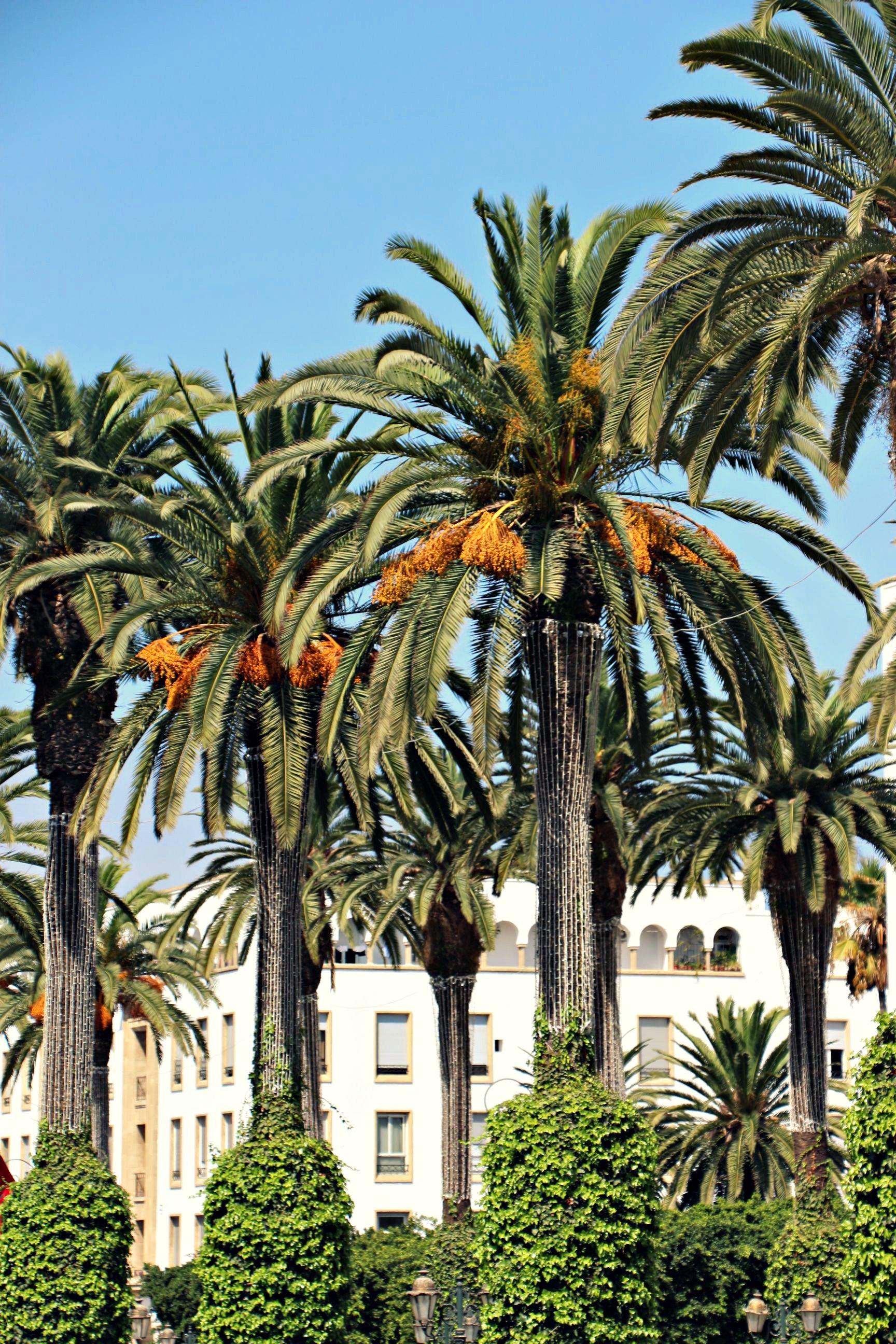 Rabat_155