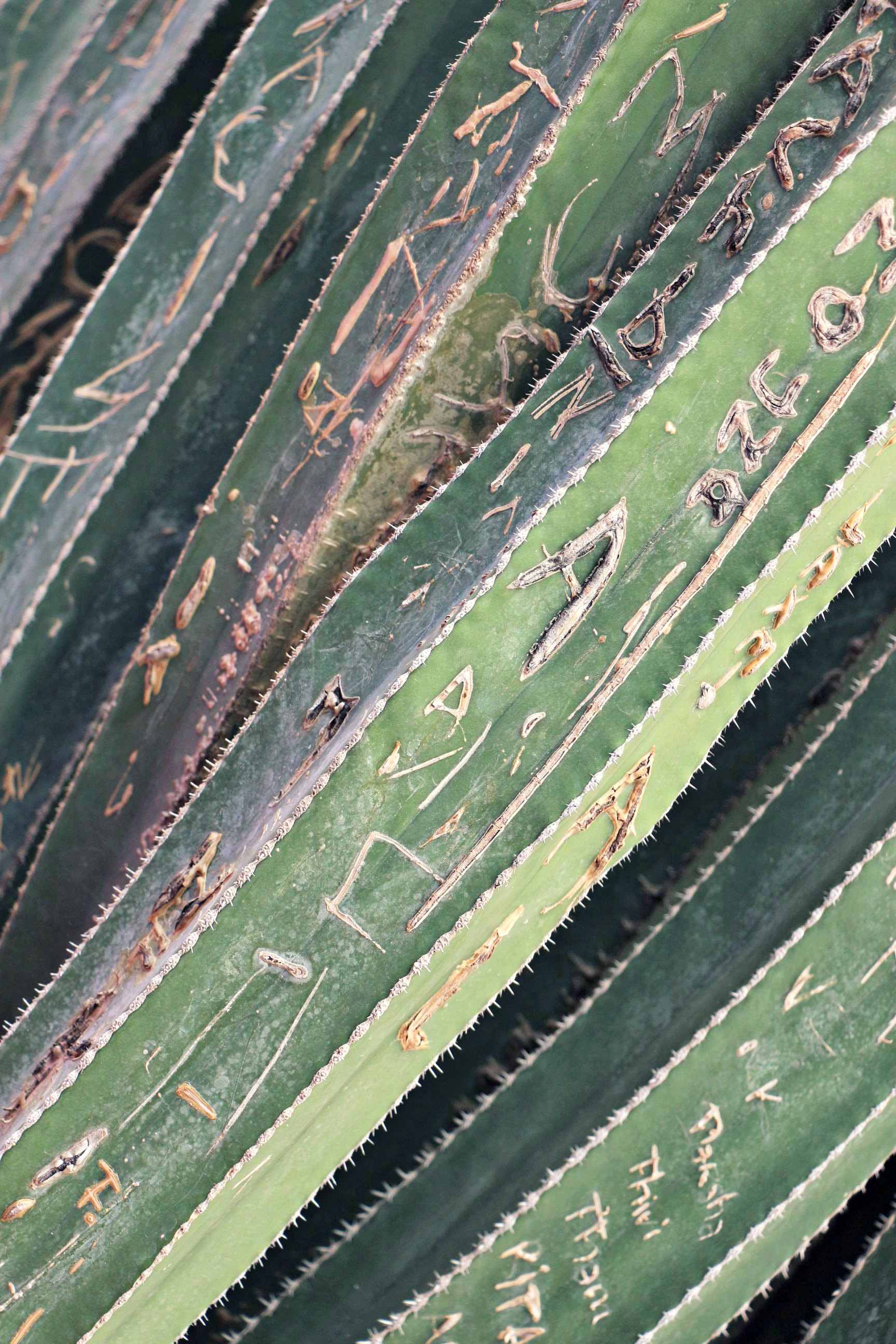 Bambus Jardin Majorelle