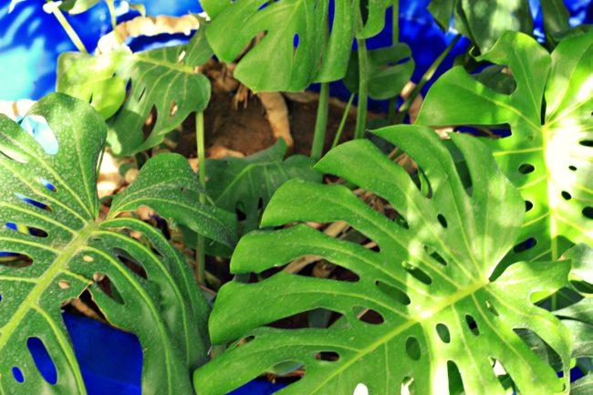 Pflanzen im Jardin Majorelle