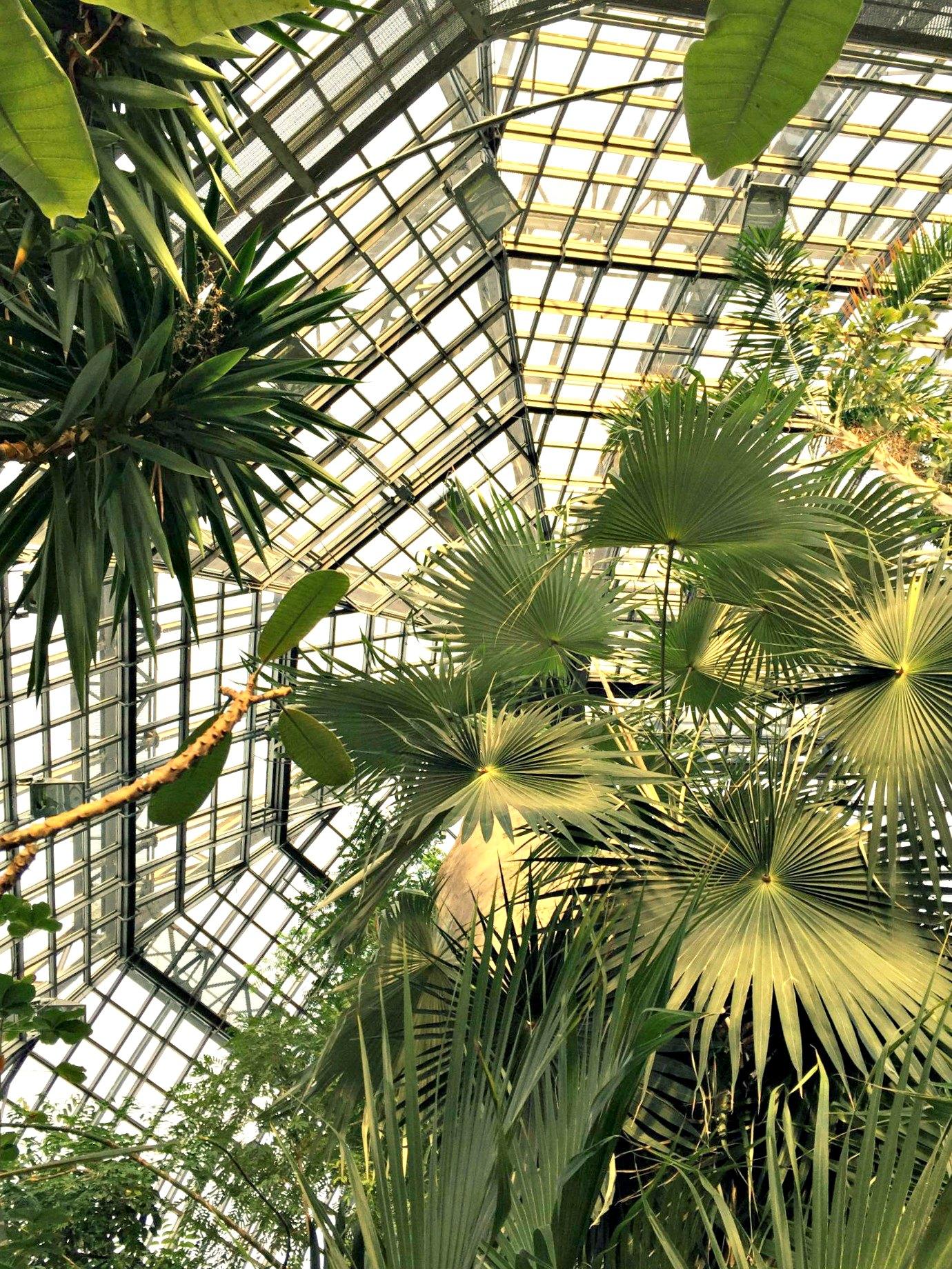 großes topenhaus botanischer garten dahlem