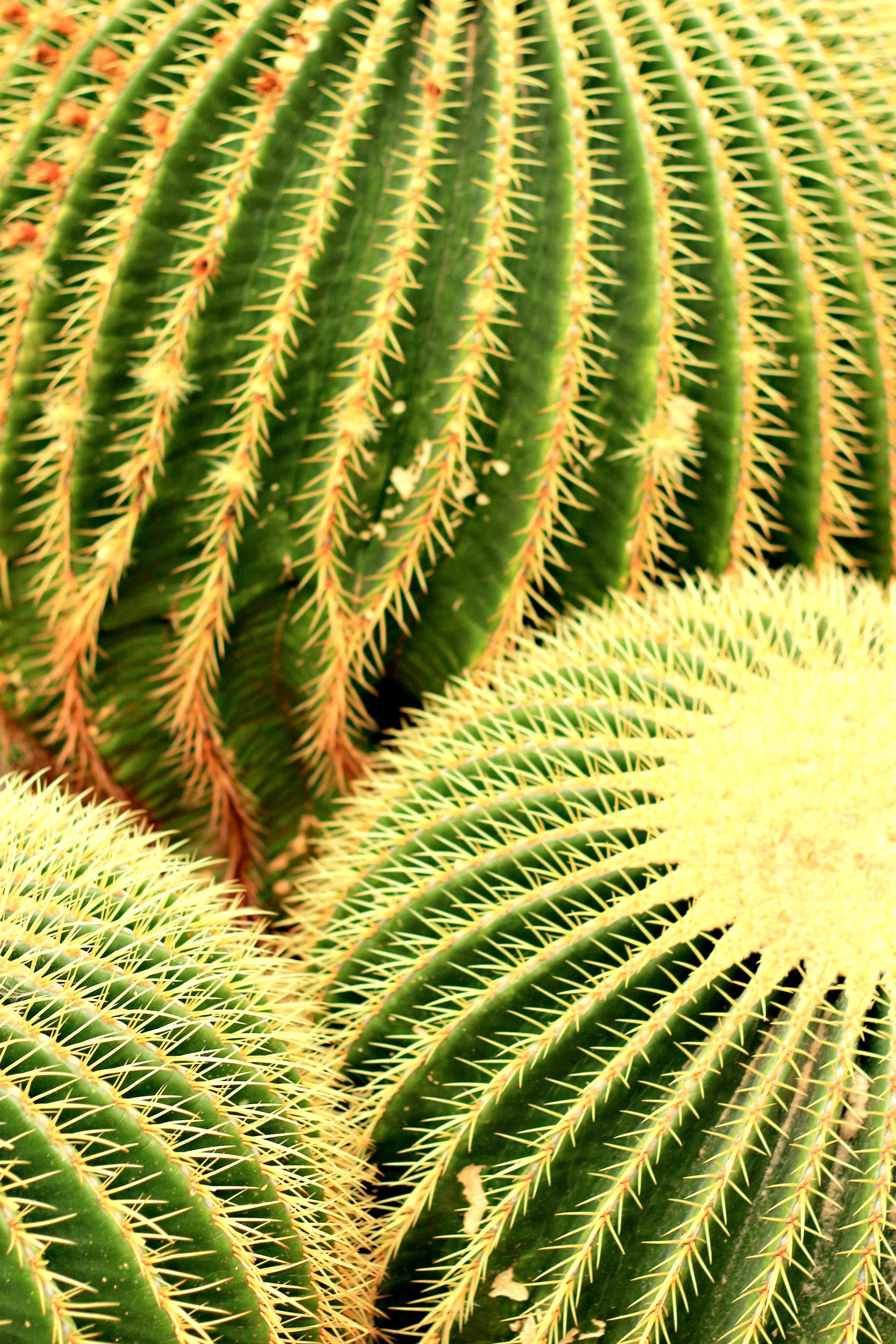 kaktus botanischer garten dahlem