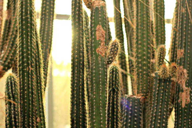 sukkulenten botanischer garten dahlem