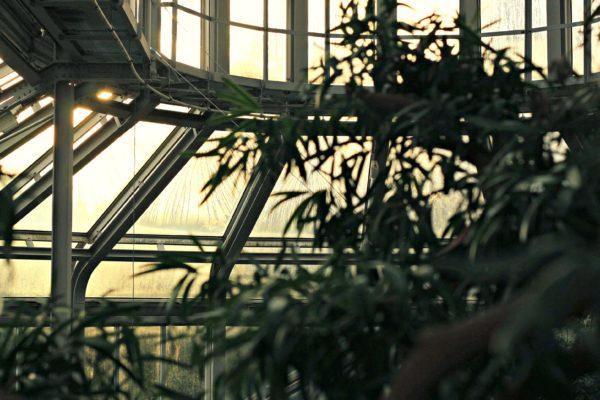 Botanischer Garten Berlin-Dahlem : Berlin-Tipps ...