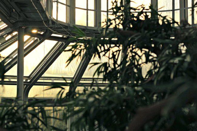 tropenhaus botanischer garten dahlem