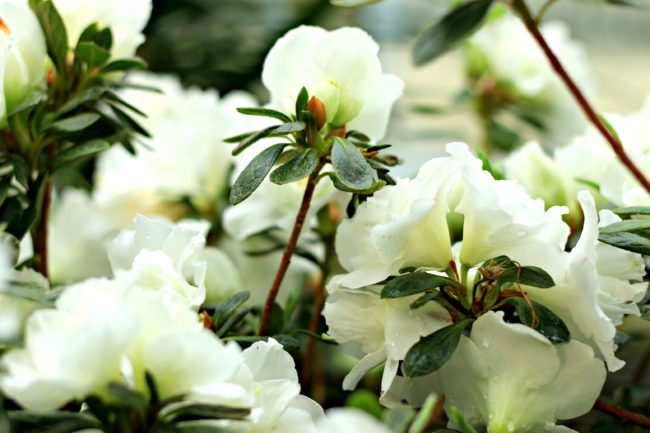 blüten botanischer garten berlin dahlem