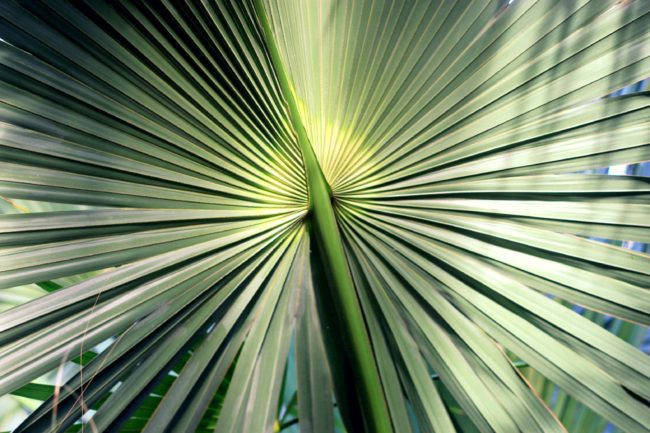 palmenblatt botanischer garten berlin
