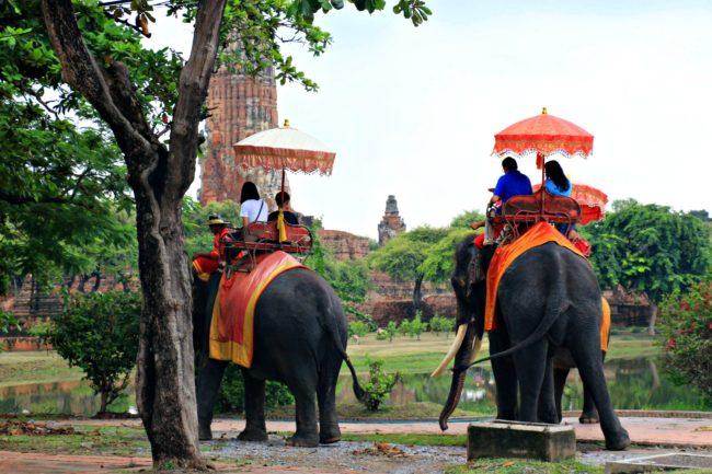 elefanten-ayutthaya-geschichtspark