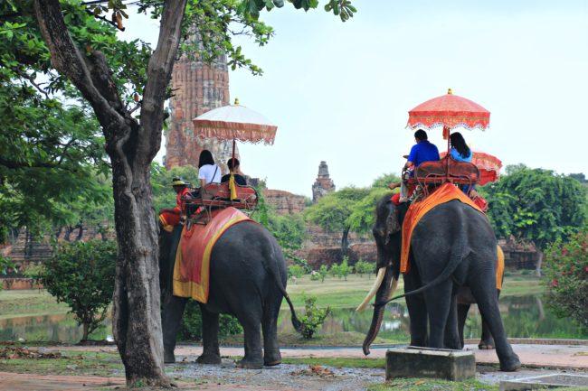 elefanten in ayutthaya