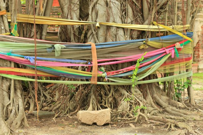 feigenbaum ayutthaya