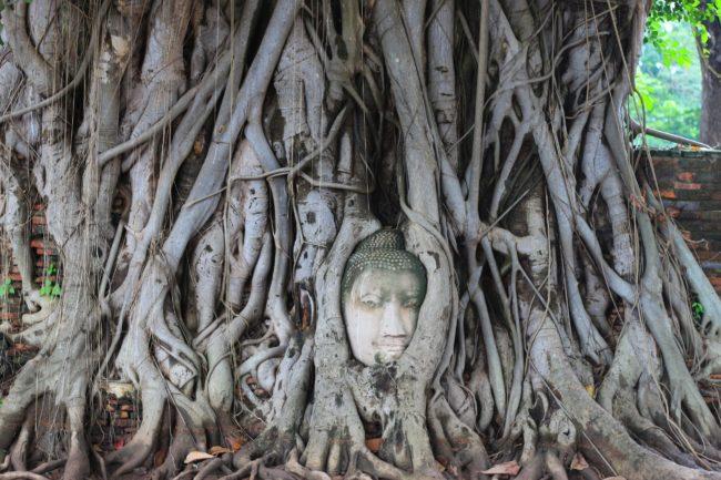 wat-mahathat-ayutthaya-buddha-gesicht-baum