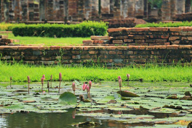 lotus sukhothai
