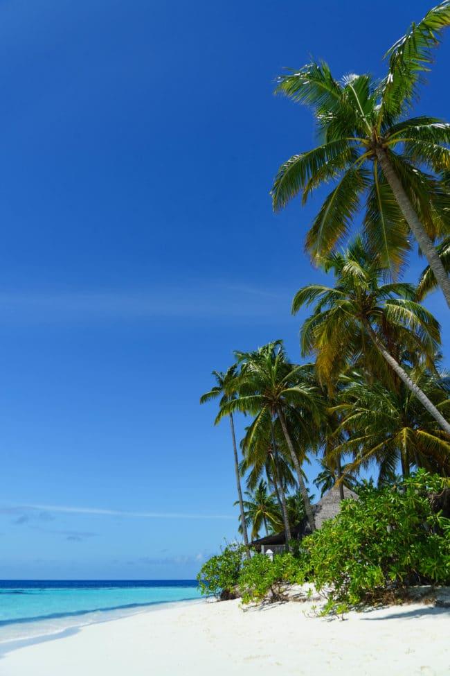 angaga palmen