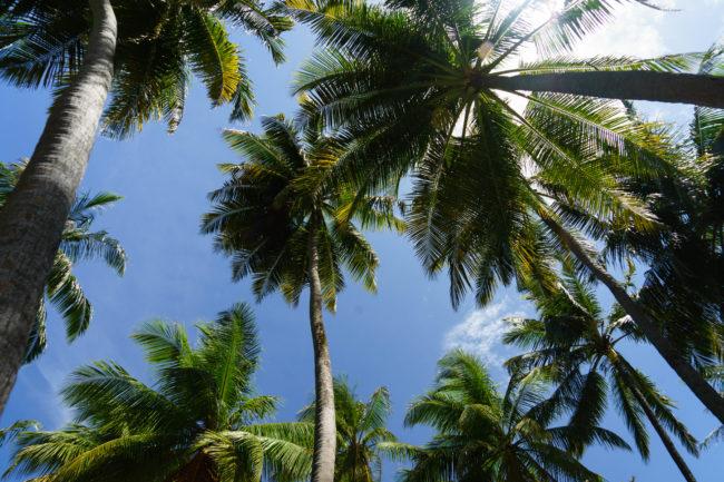 palmen angaga
