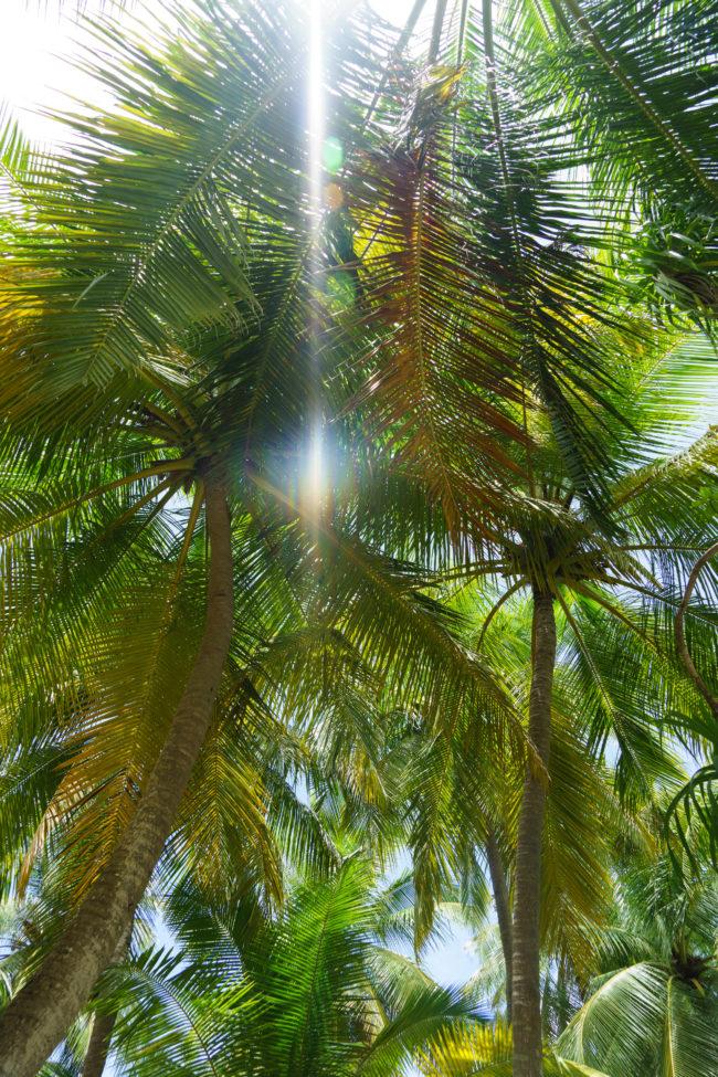 palmen malediven