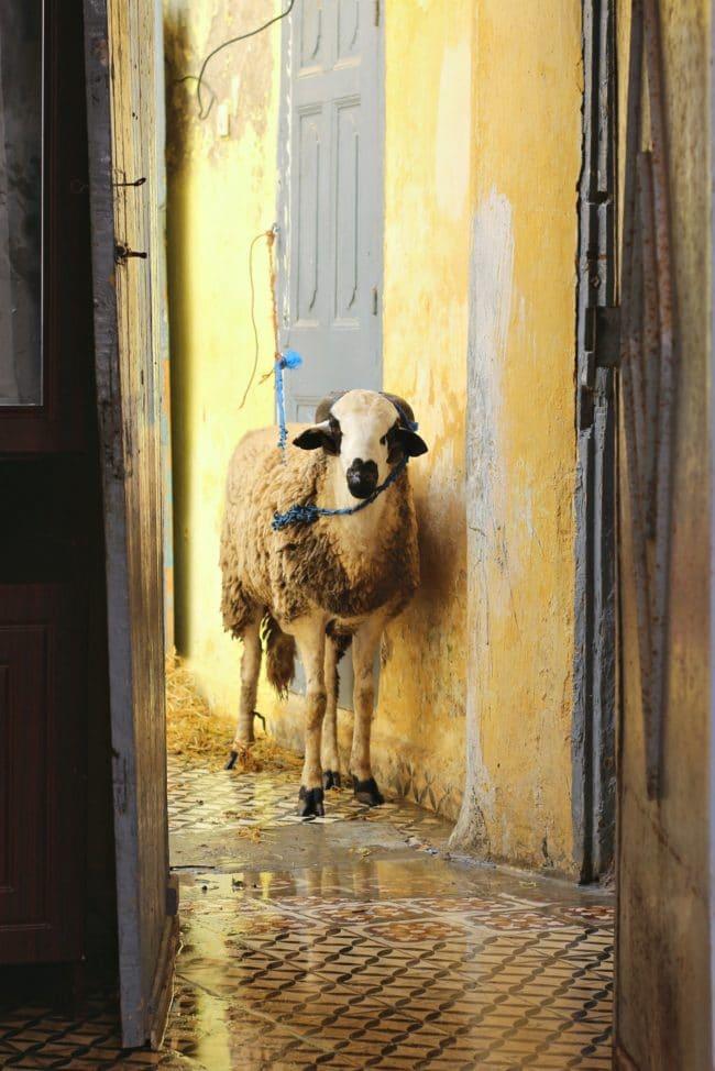 opferfest marokko