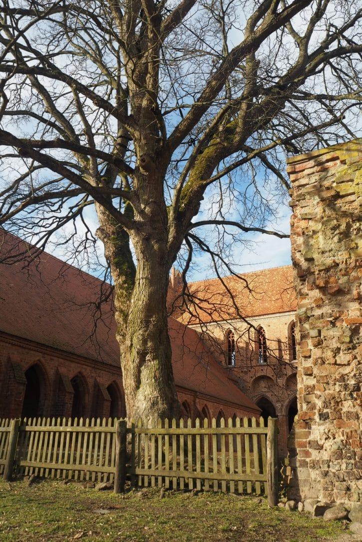klostergarten chorin